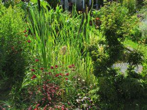 Greenhouse Pond