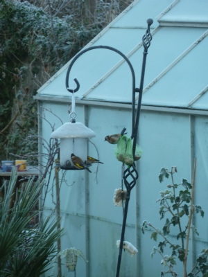 Where have all the sparrows gone?