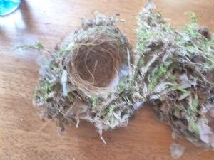 Abandoned Robin's Nest