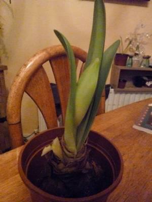 One flower stem stll to enjoy