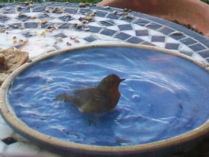 Bathing Bird!