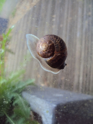 How to make a snail squirm!