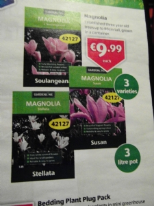 Magnolias on offer