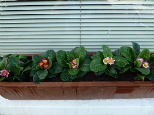 Window box for front of house