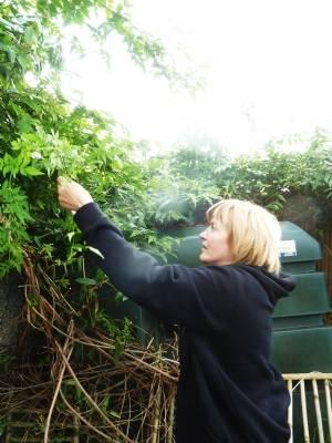 Liga taking cuttings of Jasmine
