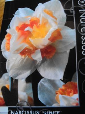 Narcissus 'Replete'
