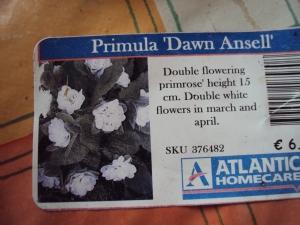 'Dawn Ansell'