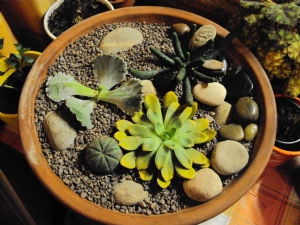 Cactus and Succulent Selection
