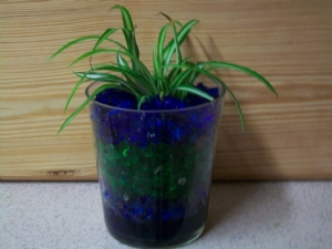 Chlorophytum in green and blue crushed glass