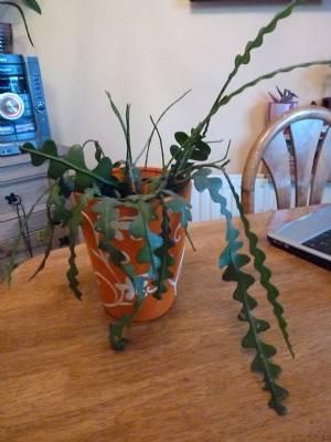 Ric-Rac Cactus