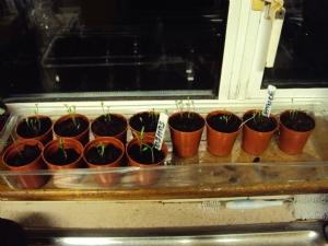 Shifting Seedlings!