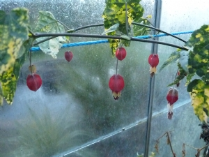 Joy in the greenhouse