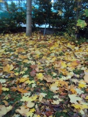 Lots of free leaves