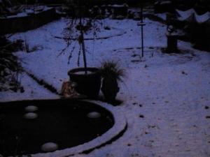 Snow Gardening Today