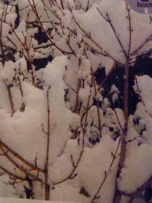 Winter pruning