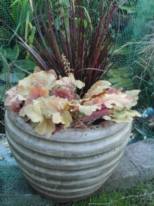 Libertia and Heuchera