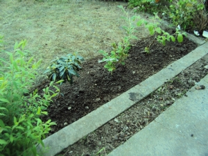 Front Garden - continued