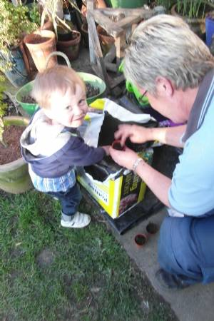 Helping Gran sow sunflower seeds
