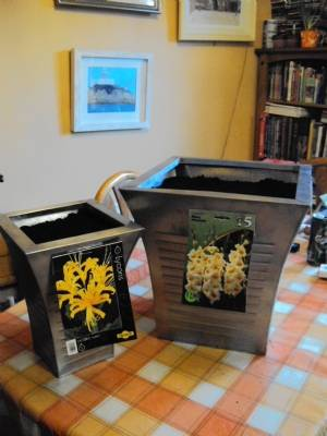Lycoris 'aurea' and Gladioli 'Mary Housely'