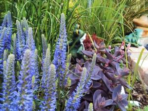 Veronica spicata and purple sedum