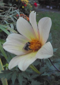 The Early Bee