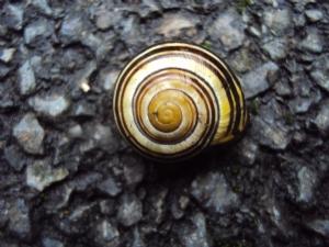 Gone to Snail Heaven