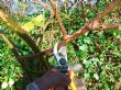 Cutting back brambles 06.12.09