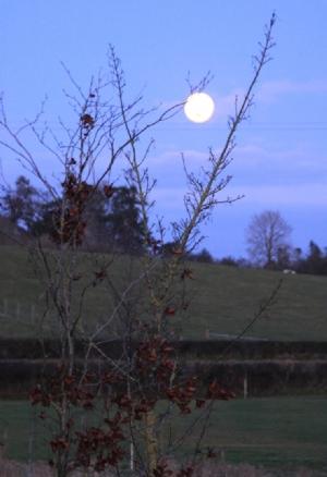 Last Moon Rising 2009