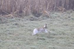 Is it Bunny Tails or a Hare Moment?