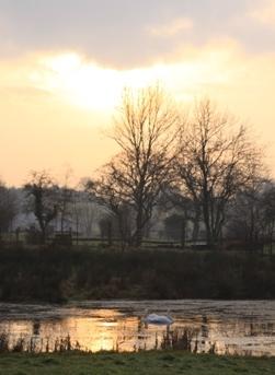 Swans & sunset
