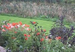 Poppies 04/10