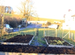 Kitchen Garden 31/01