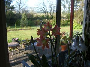 garden March 2010 005