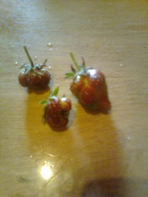 wierd shaped strawberries