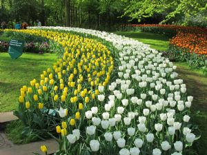 Show Me Your Garden.