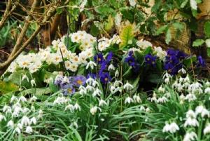 GardenFlowers 20022013