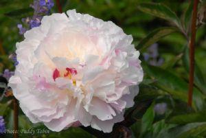 Hampton Coirt Palace Flower Show.