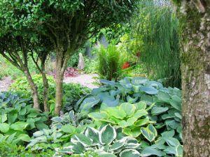 O'Donoghue Garden, Co Cork.