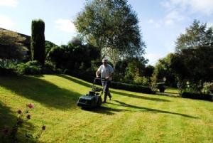 Scarifying lawns