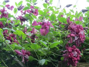 Roanmore Lad's Garden.