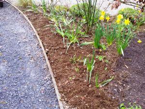 Euphorbia-free Zone