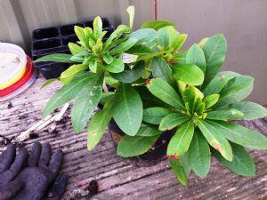 Plant ID please?