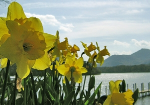 From the Web - Derwent Water & Daffodils