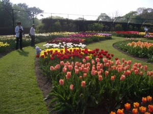 Tulips in the Bots