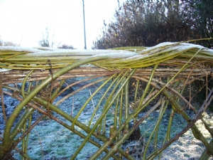How the Willow Fence should look.....