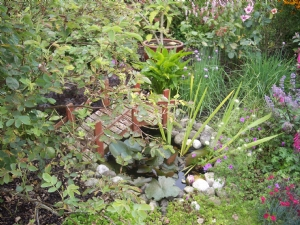 Rachel's pond - small but beautifully formed ....