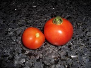 Tomatoes at last!