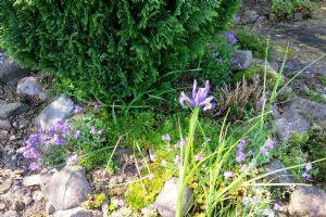 Speedy Iris