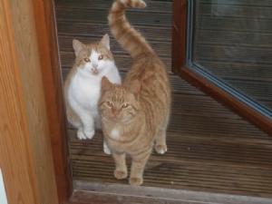 Puss and Ginger venture inside the door......