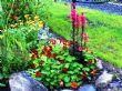 Lobelia and red nasturtium